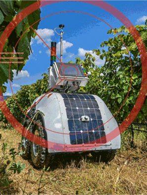 robot in vineyard